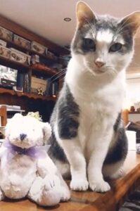 gatto con il suo orsacchiotto