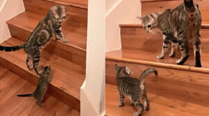 cucciolo impara a salire scale