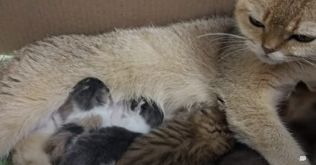 micia allatta gattini