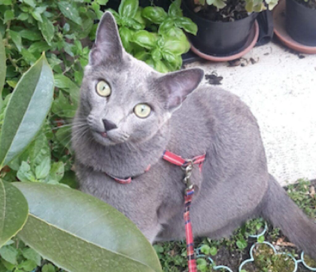 gatto fra le piante giardino