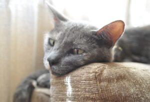 gatto si lancia inseguimento altro micio