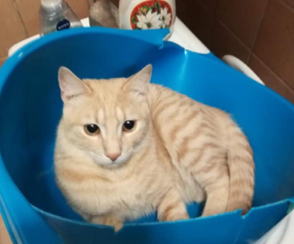gatto dentro bacinella capiente