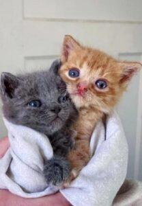 due gattini dolci