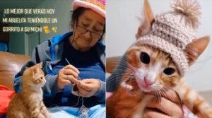 gattino con cappello di lana