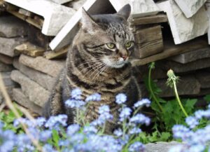 proprietaria disperata per scomparsa gatta