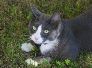 gatto sparisce proprietario ricovero