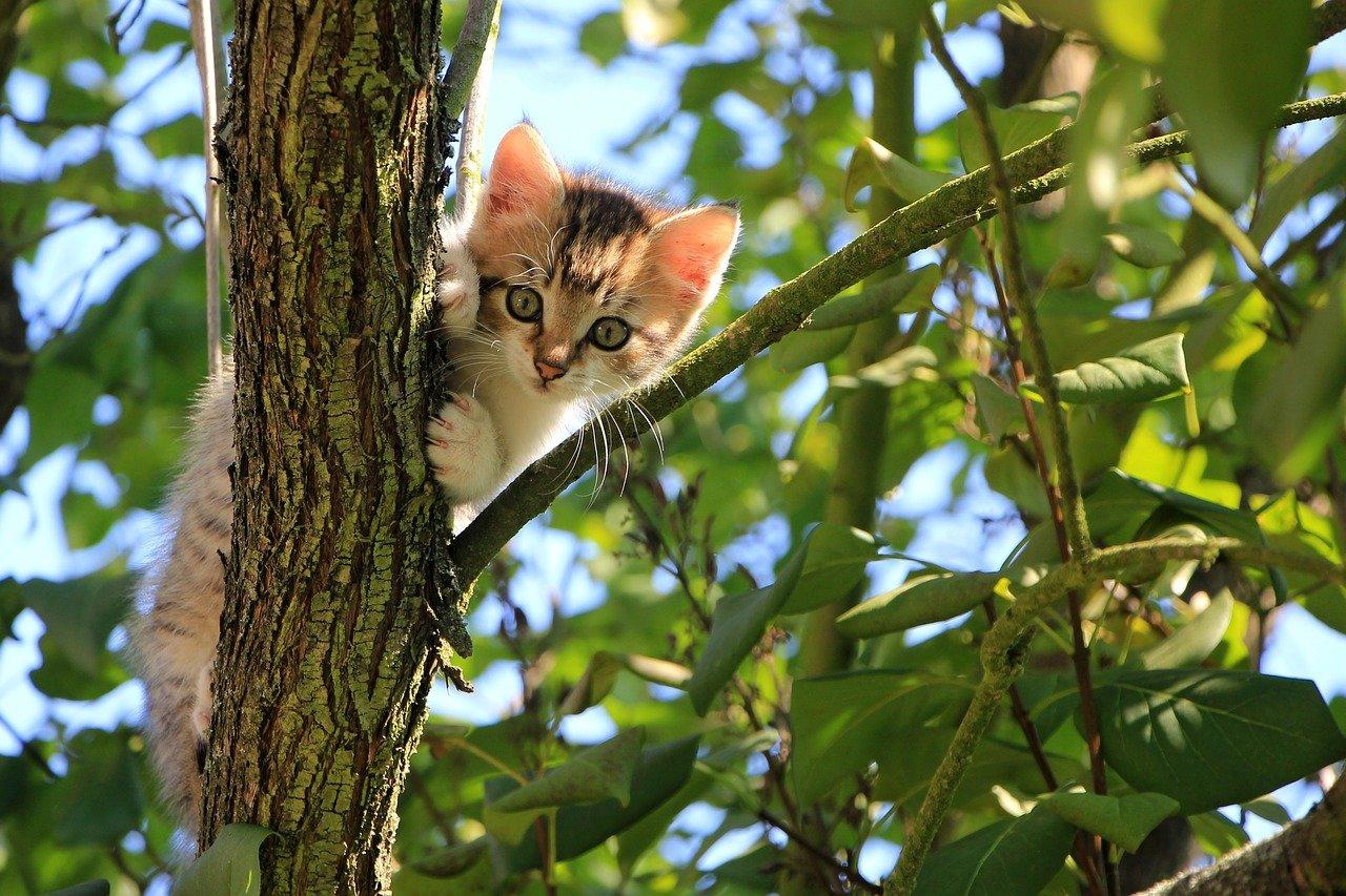 piccolo gattino arrampicato su albero