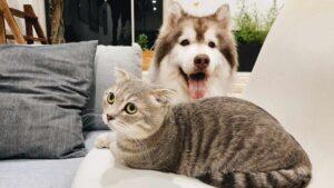rapimento di animali domestici in inghilterra