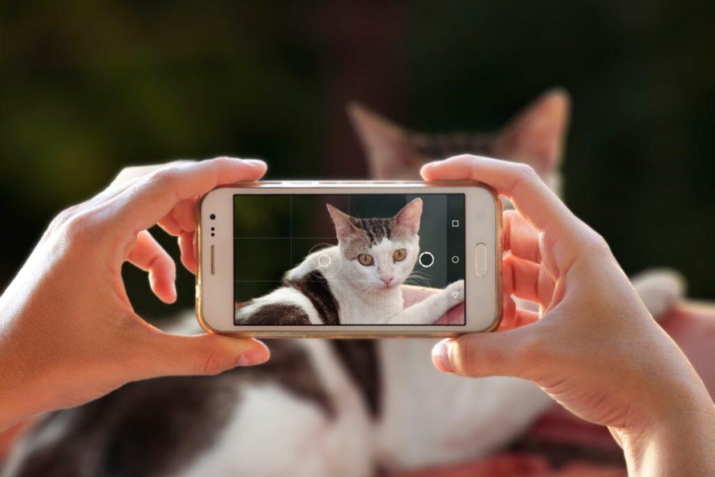 foto al gatto