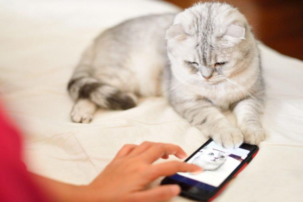 gatto incuriosito dal cellulare