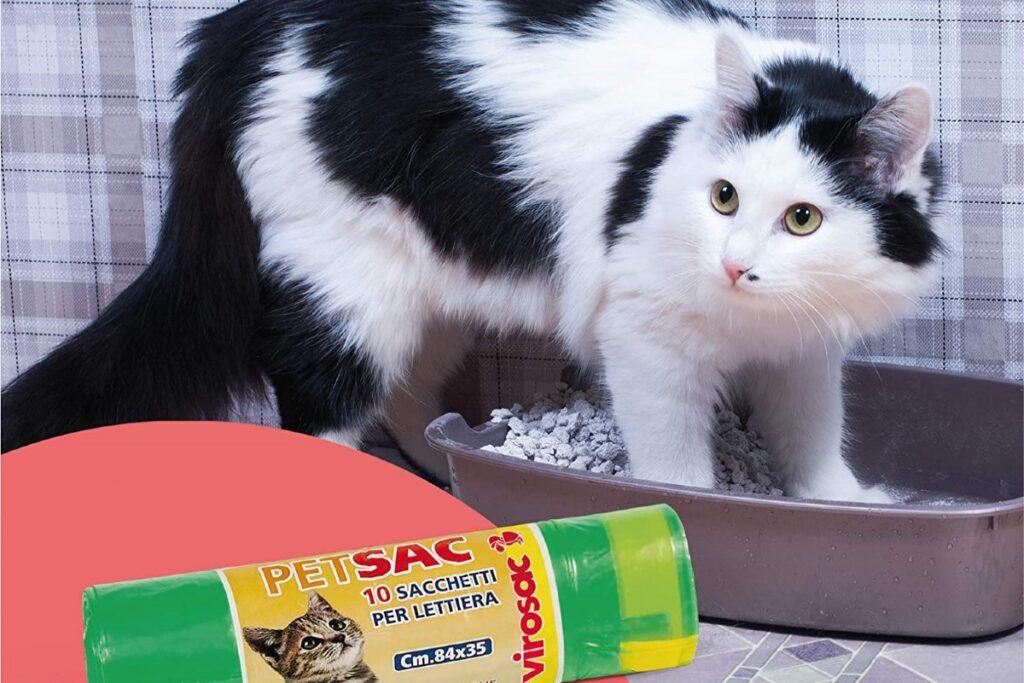 gatto fa i bisogni