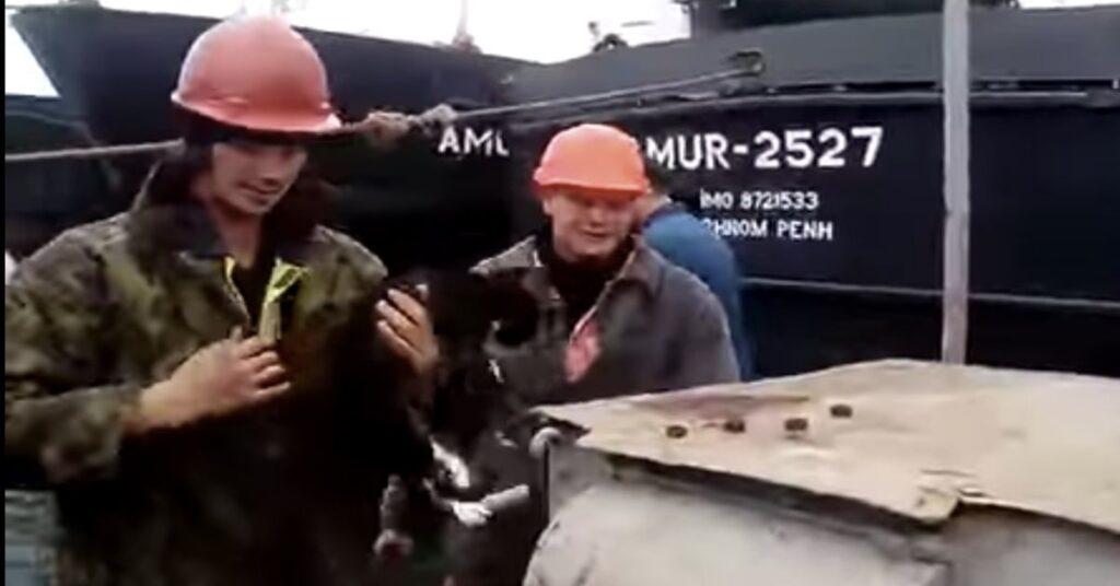 gatto salvato mentre stava per annegare