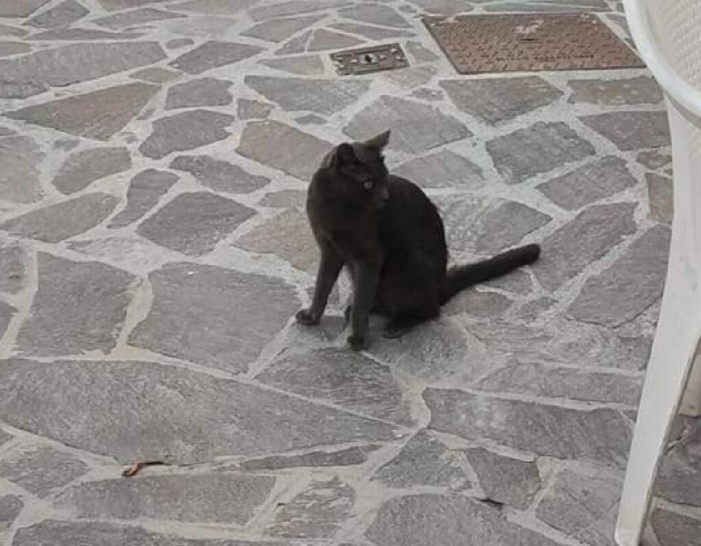 gatto bruno seduto sull'asfalto