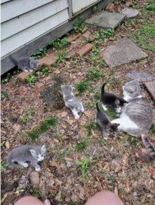 gatta randagia con i suoi gattini