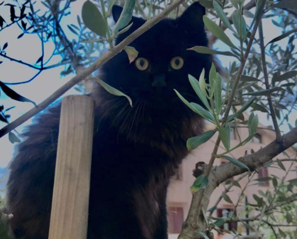 gatto su una pianta grande