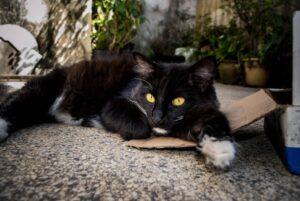 gatto grisù smarrito proprietari