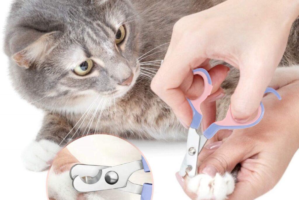 gatto si lascia accorciare le unghie
