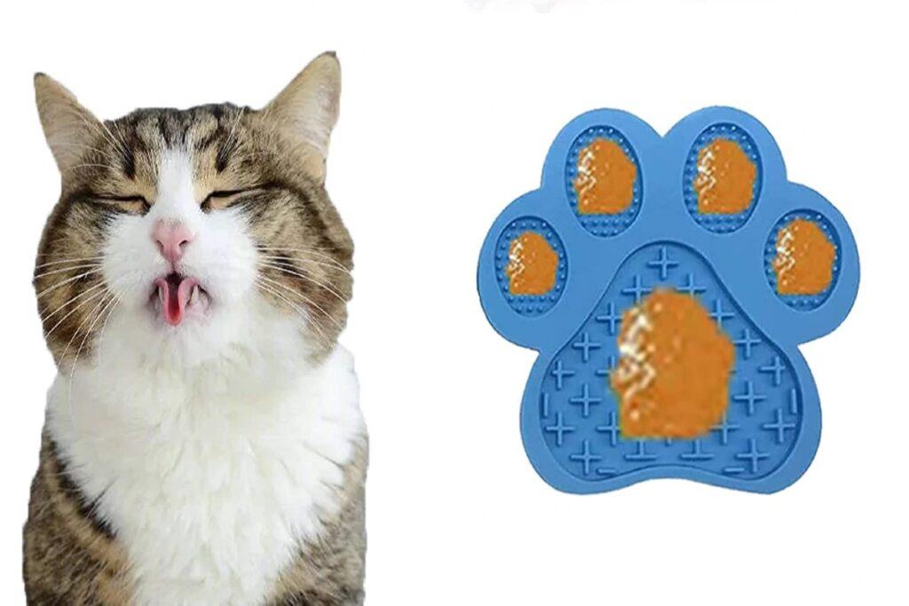 gatto goloso di cibo