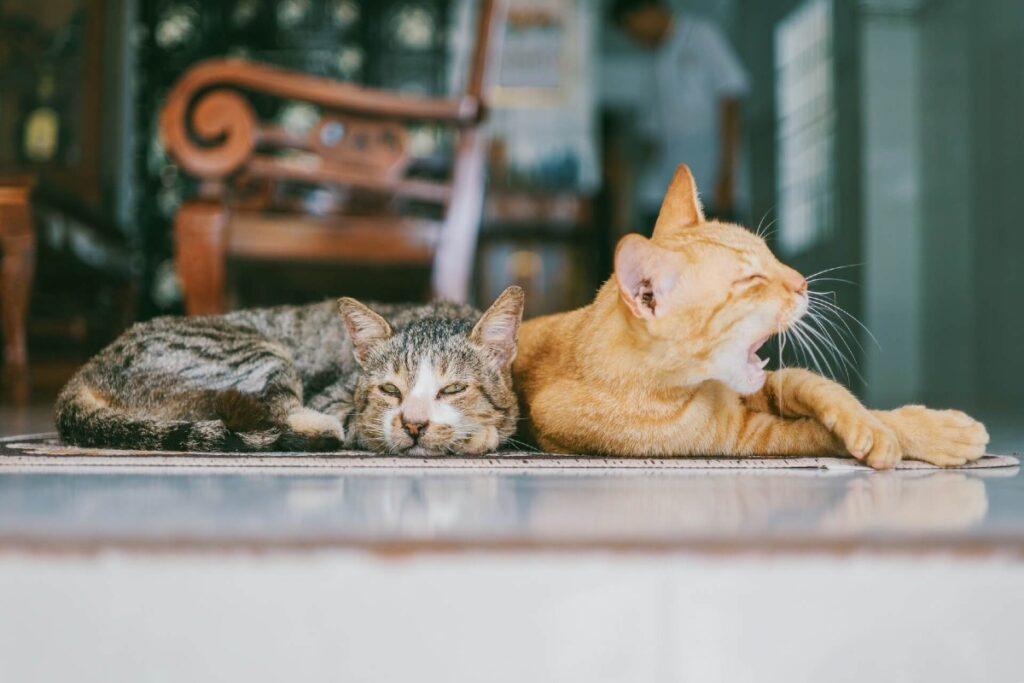 gatti sedentari