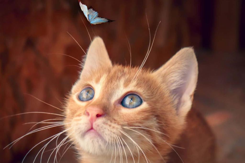 gattino guarda farfalla