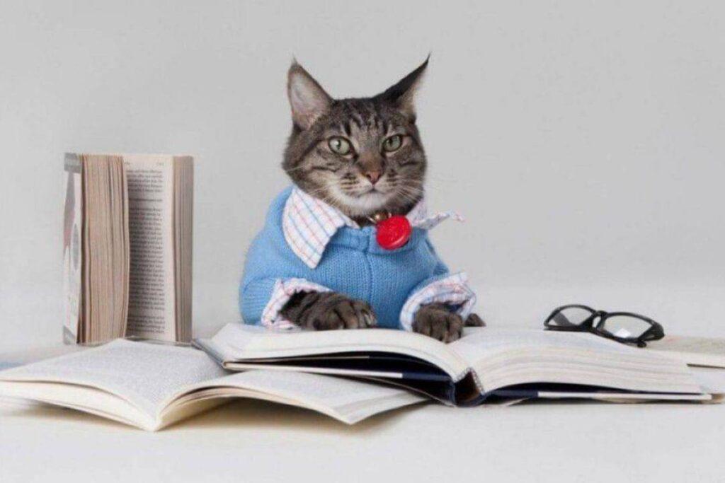 gatto intellettuale