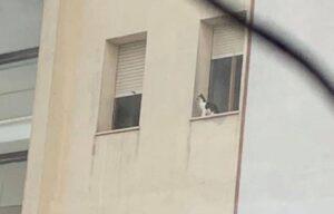 tre gattini intrappolati