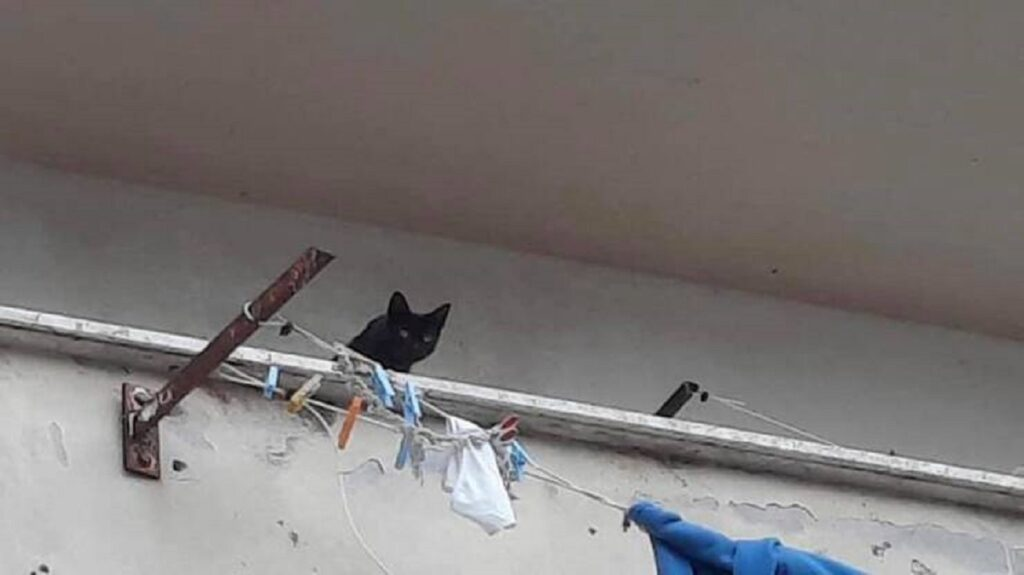 tre gattini rinchiusi in un appartamento