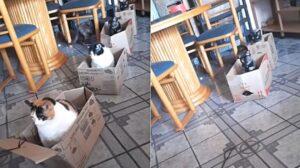 gatti dentro le scatole