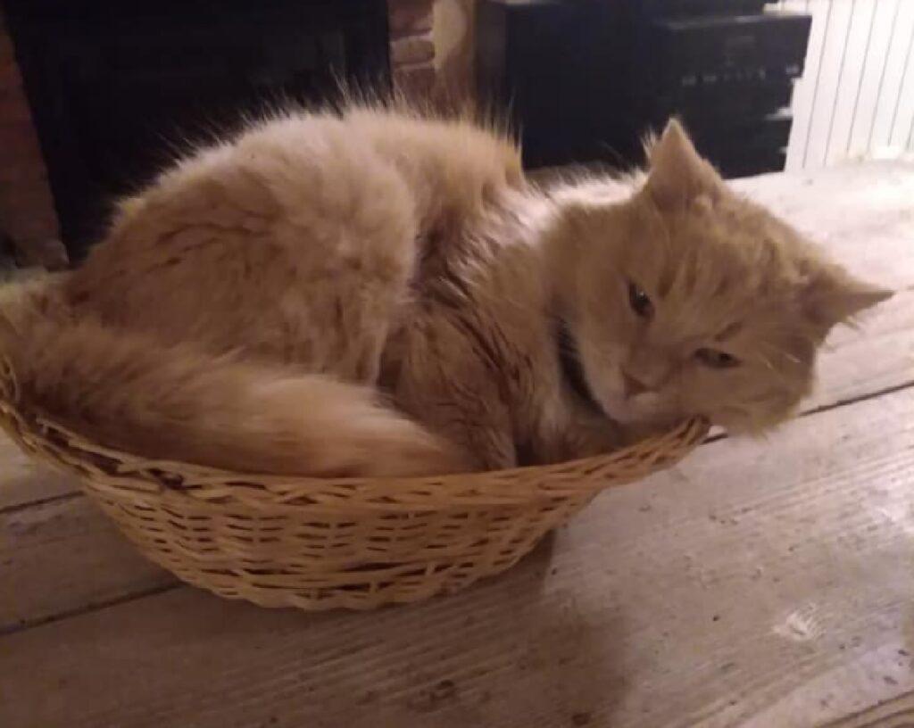 gattino collare colore azzurro