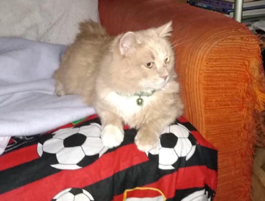 gatto seduto su divano casa