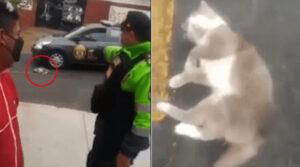 gatto salvato dalla polizia