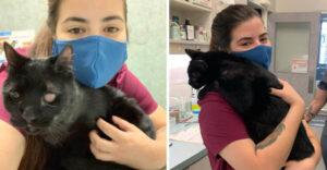 veterinario con gatto nero