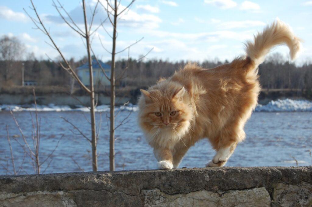 si apre il trasportino gatto scappa via