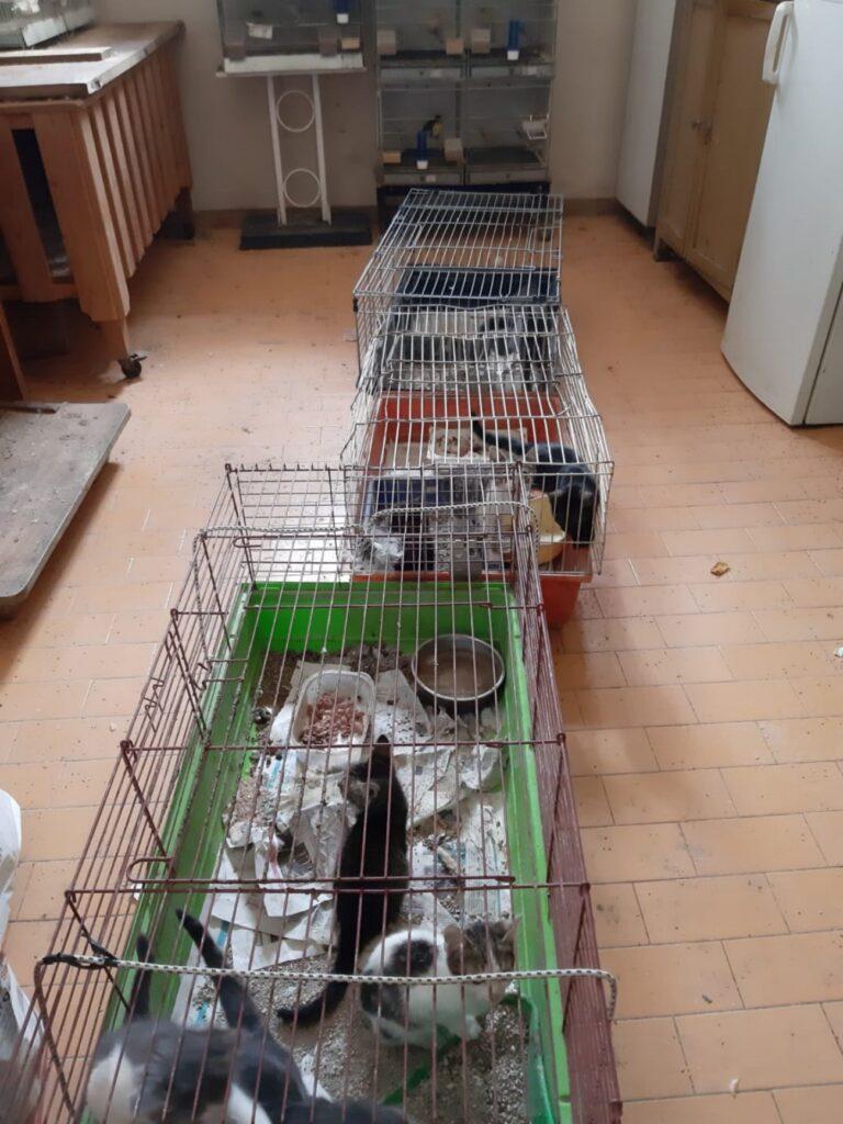 16 gatti