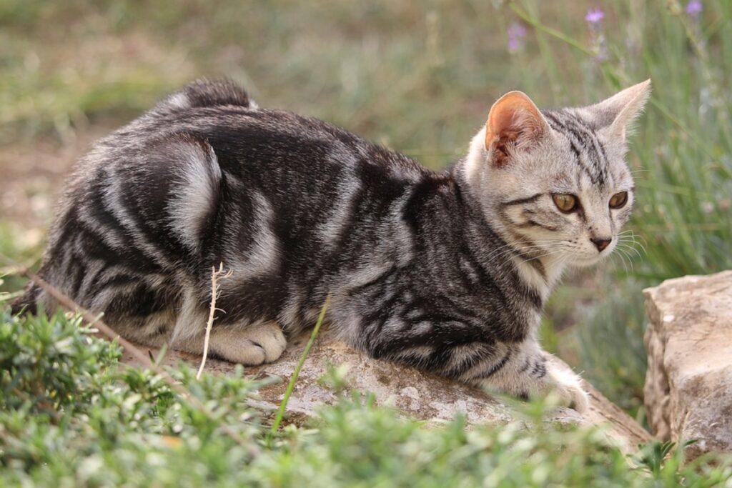 felino dolcissimo tigrato
