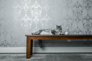 felino sopra tavolo