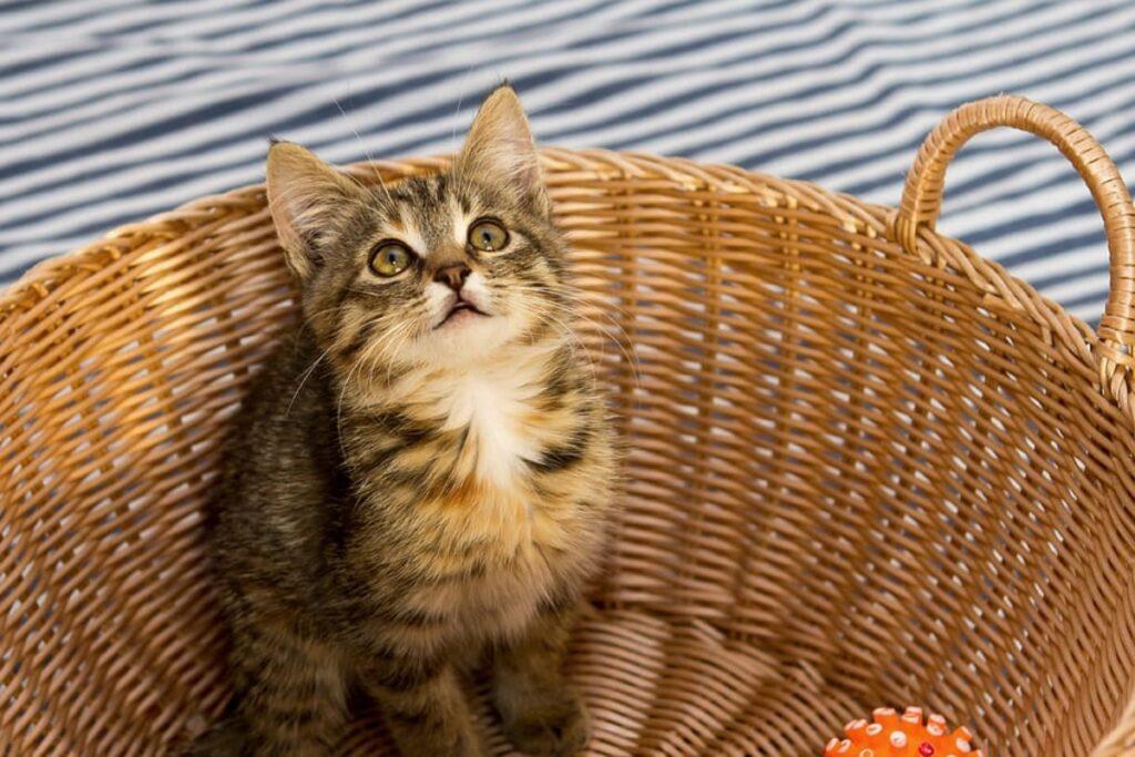 micetto nella cesta