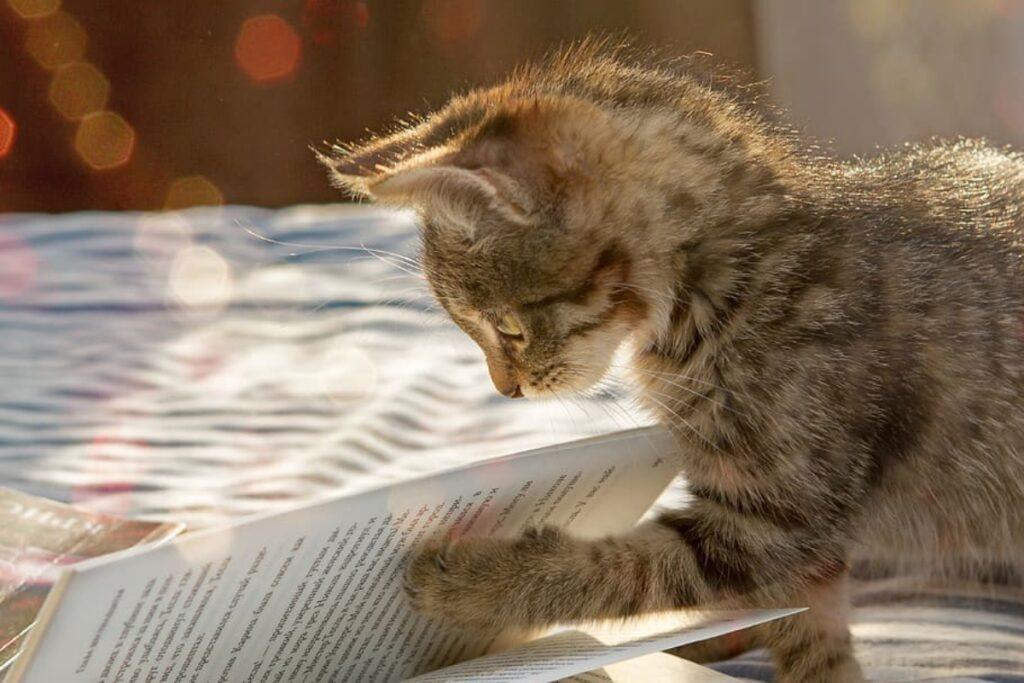 gatto zampa sfoglia