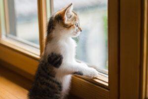felino guarda fuori