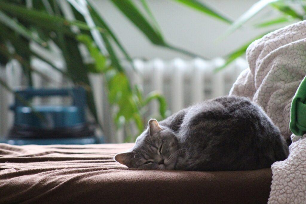 micio dolce letto