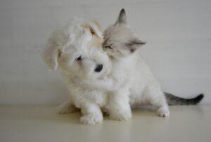 felino abbraccia cane