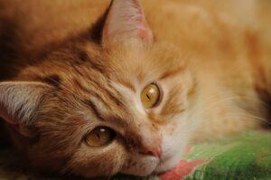 micio gattino stupendo