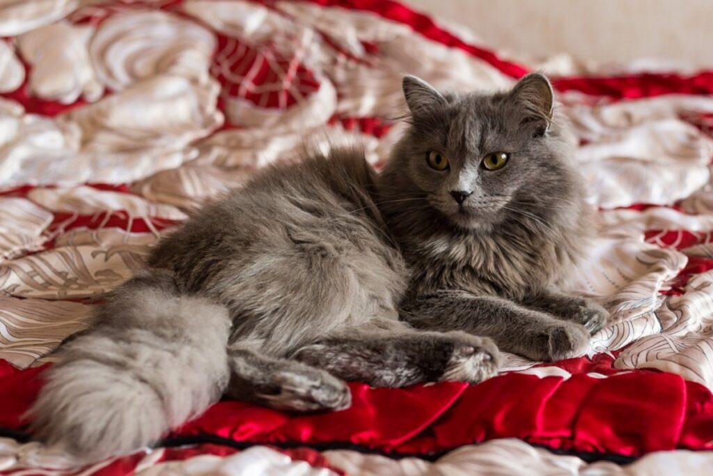 gatto grigio stupendo