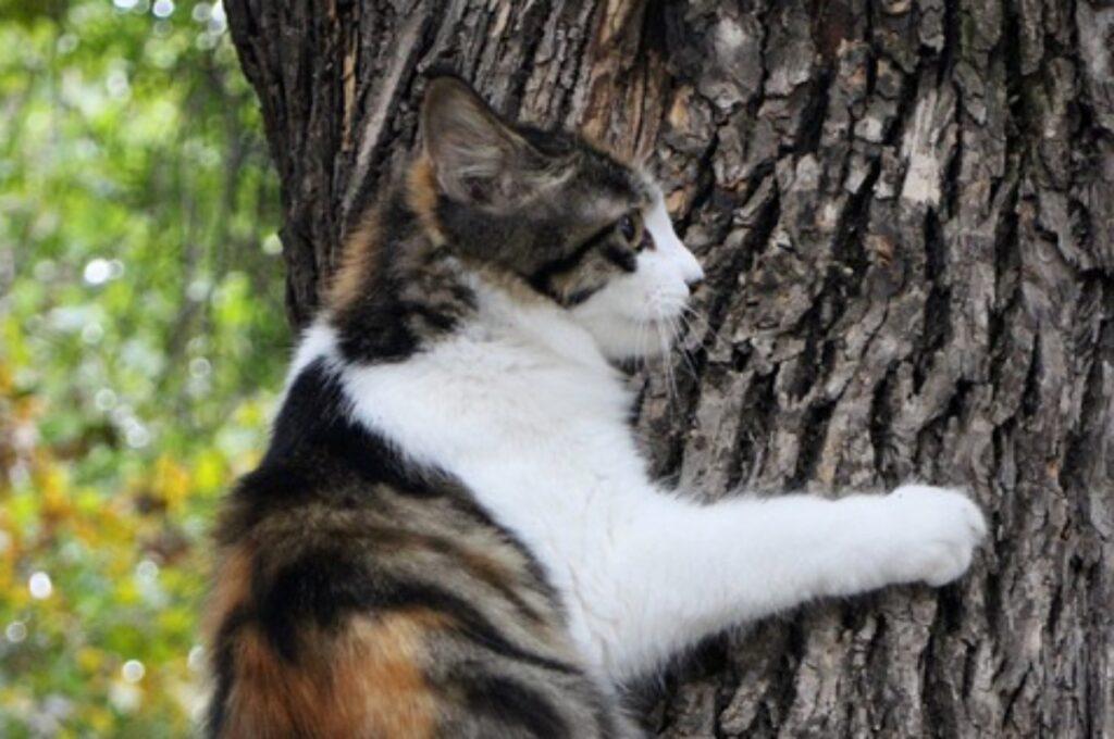 felino sopra tronco