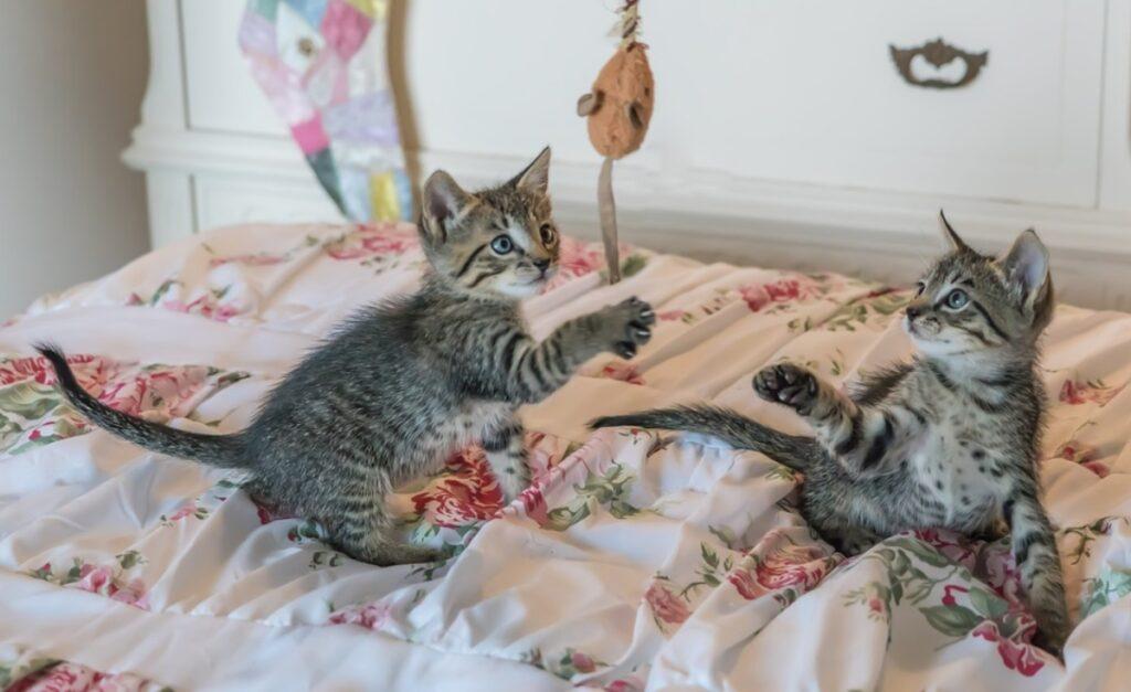 felini gicoano zampe
