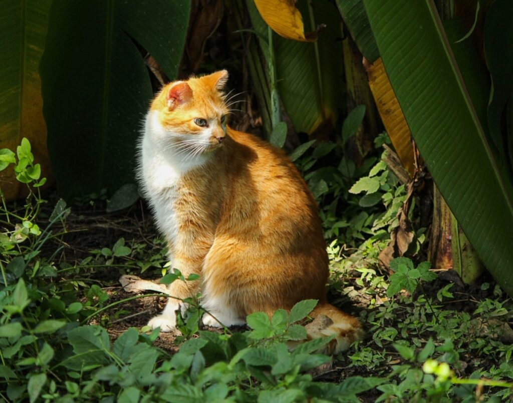 gatto natura seduto