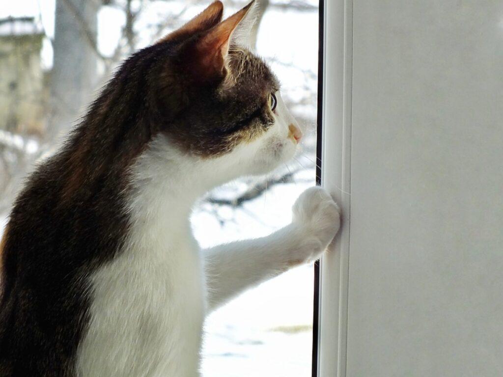 gatto zampa vetro