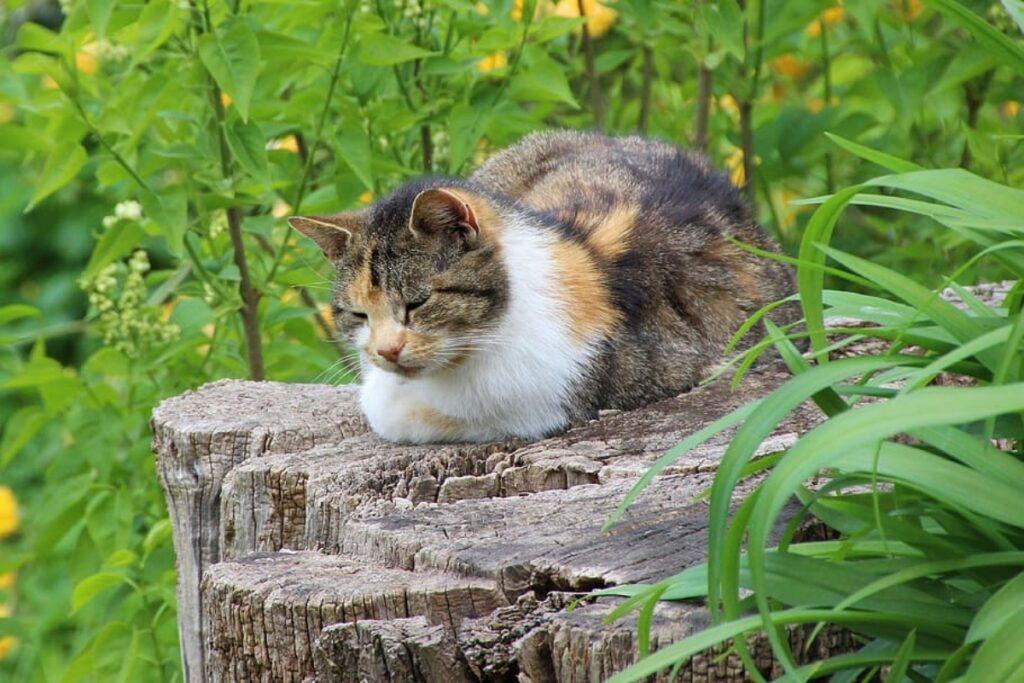 gatto nella natura