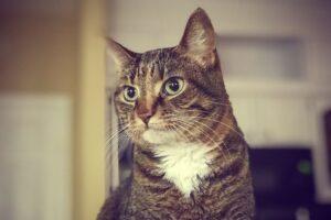 felino sguardo dolce