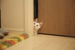 felino affaccia porta